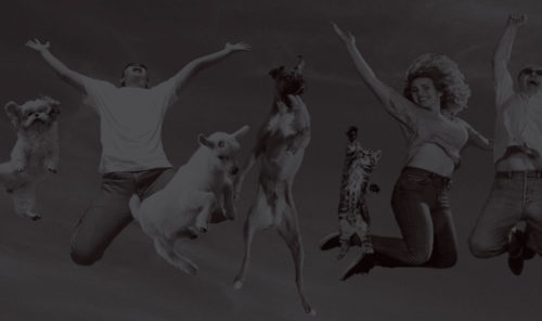 people and animals jumping up in celebration - stylized black and white image
